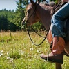 Half Off Horseback Trail Rides for Two in Gates