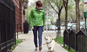 Rain City Paws: Three or Five 30-Minute Dog Walks for One Dog from Rain City Paws (Up to 50% Off)