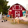 Up to 58% Off Pumpkin Patch and Petting Zoo