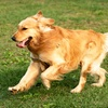Up to 54% Off Dog Boarding in Mount Pleasant