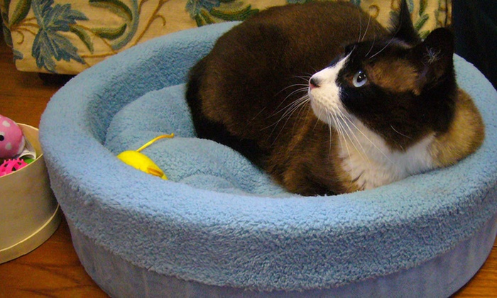 Furhaven Cat Cup Beds: $20 for a Furhaven Cat Cup Bed ($34.99 List Price). Four Colors Available. Free Shipping and Free Returns.