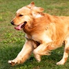 Up to 53% Off Dog Grooming in Anniston