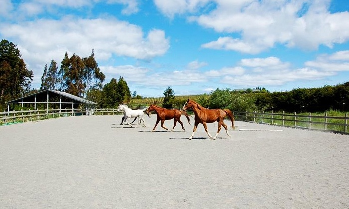 Icssoma Farm - Sebastopol: Three 60-Minute Lessons in Working with Horses for One or Two at Icssoma Farm (Up to 56% Off)