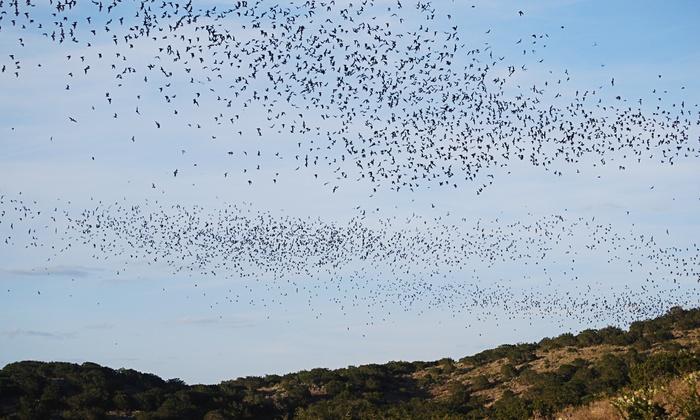 Frio Bat Flight - Concan: Bat-Flight Tour for Two or Four from Frio Bat Flight (Up to 54% Off)