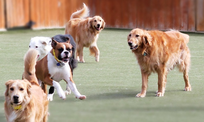 Happy Tails, Inc. - Saint Ann: Three, Five or Seven Nights of Dog Boarding or Three Weeks of Training at Happy Tails, Inc. (Up to 58% Off)