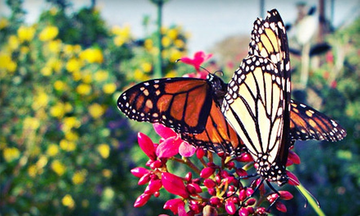 South Texas Botanical Gardens & Nature Center - South Side: Individual, Couple, or Family Membership or Visit for Two at South Texas Botanical Gardens & Nature Center (Half Off)
