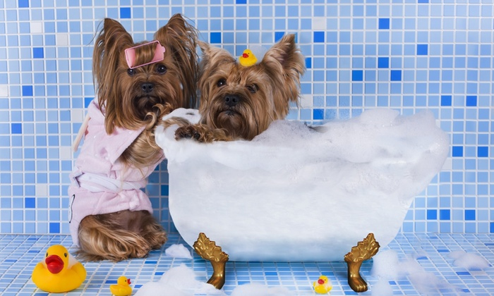 TAILS Pet Spa - Pinellas Park: $10 for $20 Toward a Full Grooming Service Package from TAILS Pet Spa