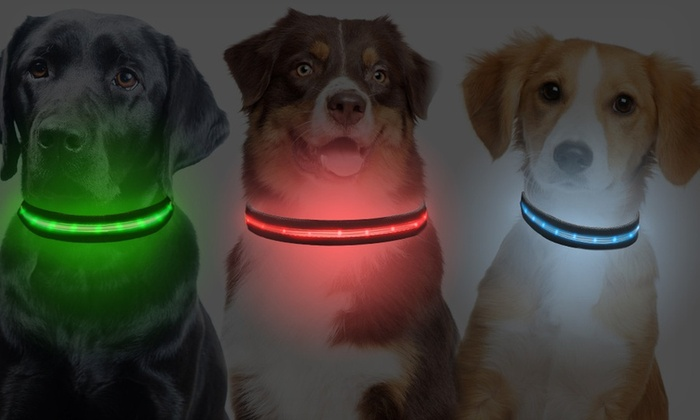 ShopTough LED Collar or Leash: ShopTough Series 1000 LED Dog Collar or Leash. Multiple Sizes and Colors Available from $9.99-$12.99. Free Returns.