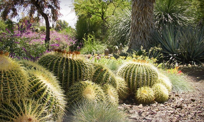 The Ruth Bancroft Garden - Estate of Walnut Creek: $17 for a One-Year Garden Membership to The Ruth Bancroft Garden ($35 Value)