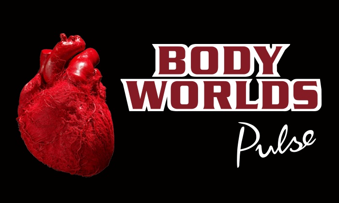 """""""Body Worlds"""" - Discovery Times Square: """"Body Worlds: Pulse"""" Human-Anatomy Exhibit at Discovery Times Square (Up to 46% Off)"""
