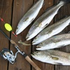 Up to 51% Off Bay Fishing Charter