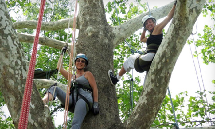 EarthJoy Tree Adventures - AJ Jolly Park: Tree-Climbing Adventure for Two or Four from EarthJoy Tree Adventures (Up to 51% Off)
