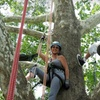 Up to 51% Off Tree-Climbing Lesson