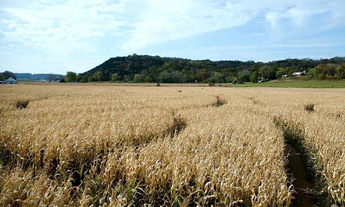 Waldvogel's Pumpkin Farm - Burnett: Hayride and Corn Maze Tickets for Two, Four, or Six at Waldvogel's Pumpkin Farm (Up to 48% Off)