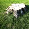 50% Off Tree-Stump Grinding