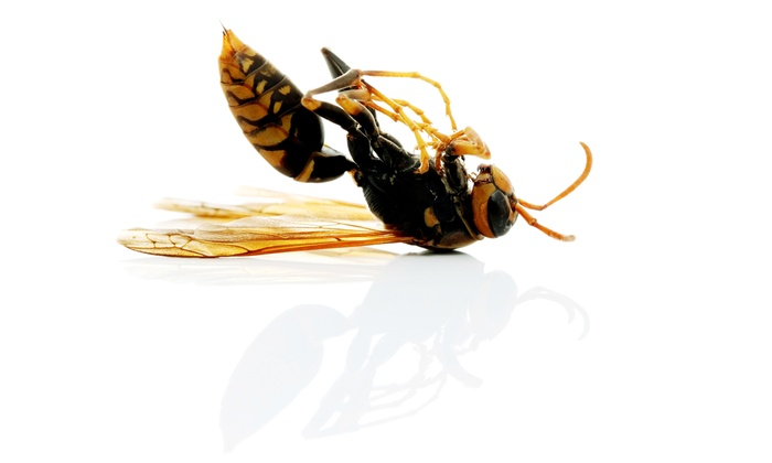 Precision Pest Management - Downtown Plano: $45 for a Full-Perimeter Power Spray from Precision Pest Management ($199 Value)