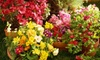 Boulevard Flower Gardens at Ruffin Mill - Bermuda: $20 for $40 Worth of Flowers, Plants, and Trees at Boulevard Flower Gardens at Ruffin Mill in South Chesterfield