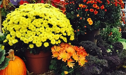 Plants and Gardening Supplies at Frager's Garden Center (Up to 42% Off). Two Options Available.