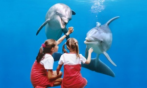 Boudewijn Seapark: Passez une formidable journée grâce aux tickets pour Boudewijn Seapark Bruges