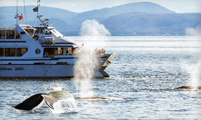 Croisieres 2001 - Tadoussac: Whale-Watching Cruise for One Adult or Two Adults and Two Children with Croisieres 2001 (Up to 51% Off)