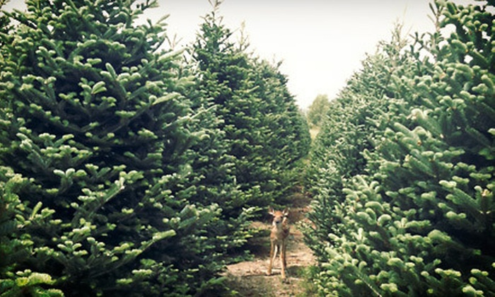 Hunt Tree Company - Multiple Locations: $15 for $30 Worth of Christmas Trees from Hunt Tree Company