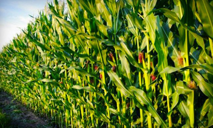 SeaBloom Farms - Sugar Valley-Resaca: Corn Maze for Two or Four at SeaBloom Farms (Up to 53% Off)