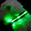 Solar-Powered LED Dog Collars and Leashes