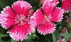 Laska's Gardens - Saint Paul Park: One-Time or Routine Services from Laskas Gardens (Up to 54% Off). Four Options Available.