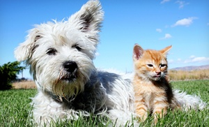 Pet Care & Catering: Birthday Party for Pets with Up to 5 or 10 Party Guests from Pet Care & Catering (Up to 54% Off)