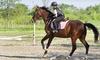 Centre équestre du marais - Escautpont: 4h de cours de poney ou cheval dès 29,90 € au Centre Equestre du Marais
