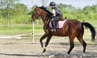 4h de cours de poney ou cheval dès 29,90 € au Centre Equestre du Marais