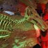 Houston Museum of Natural Science – Half Off Halloween Mixer