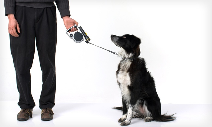 BZ Pet Dog-Leash Bundle: $15 for a BZ Pet Dog-Leash with Flashlight, Baggy Dispenser, and Safety Collar ($49.95 List Price). Free Shipping.