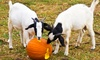 Red Mountain Open Farm - RED MOUNTAIN OPEN FARM: Autumn Dayout Family Entry to Red Mountain Open Farm (60% Off)