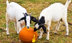 Red Mountain Open Farm: Autumn Dayout Family Entry to Red Mountain Open Farm (60% Off)