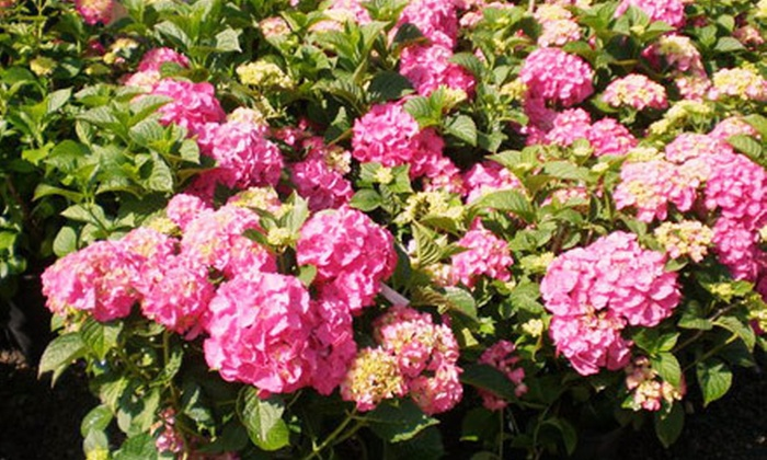 Lincoln Park Nursery - Lincoln Park Nursery: $15 for $30 Worth of Trees, Shrubs, and Plants at Lincoln Park Nursery