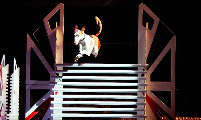 SuperDogs - Budweiser Events Center: SuperDogs Show with Preshow Pat and Chat for Four at the Budweiser Events Center on January 27 (Up to 57% Off)