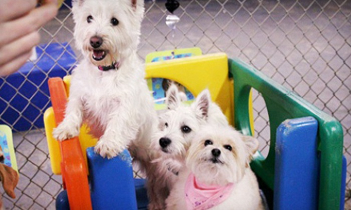 Doggie Paradise - Wallington: Three Nights of Boarding or Two Full Days of Daycare for One Dog at Doggie Paradise (Up to 59% Off)