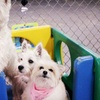 Up to 59% Off Dog Daycare or Boarding