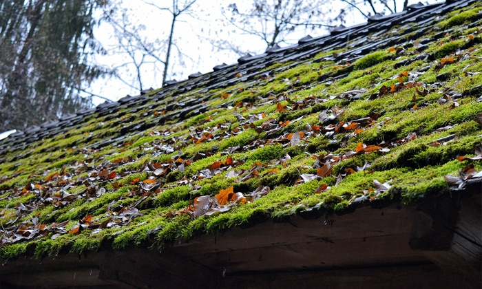 The Moss Busters   Seattle: $99 For Roof Moss Treatment For Up To 2,000  Square
