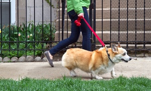 Walk N Out Pet Services: One-Hour Dog Walks from Walk N Out Pet Services (Up to 51% Off). Three Options Available.