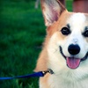 Up to 58% Off Dog Grooming or Boarding