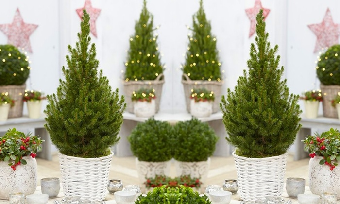 Christmas tree in white basket groupon goods for Non christmas tree
