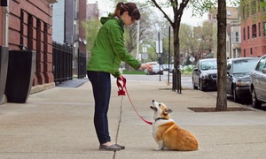 Leash Pals: 5 or 10 15-Minute Individual Dog Walks from Leash Pals (Up to 56% Off)
