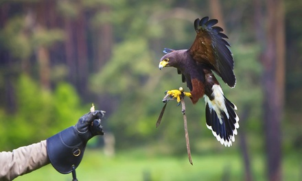 Falconry Experience for One or Two Children or Adults or Family of Up to Five at Fixter Falconry (Up to 75% Off)