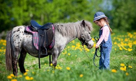 Curso de kinder pony con picnic y fotografías de la experiencia para uno o dos niños desde 14,90 €
