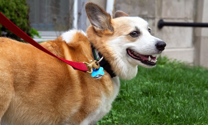 Wag! - Los Angeles: Three or Five 30-Minute Private, GPS-Tracked Dog Walks for One Dog from Wag! (Up to 61% Off)