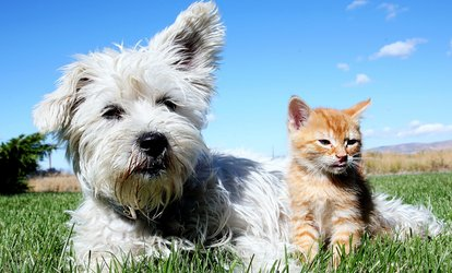 image for Rabies or Rabies and Distemper Vaccination Package for Dog or Cat at Bensenville Animal Hospital (Up to 55% Off)