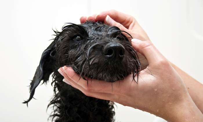 Doggie Spa - El Cerrito: Grooming for a Dog Over or Under 30 Pounds (Up to 55% Off)