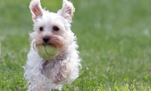 The Norvilles: Three Days of Dog Play Group or Two Dog Training Classes at The Norvilles (Up to 53% Off)